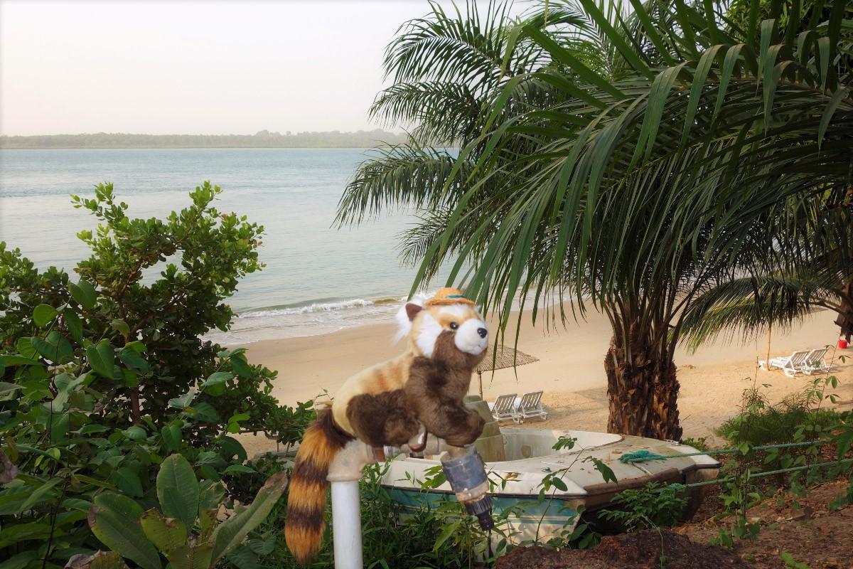 plyšová panda Bagalio v Guinea-Bissau