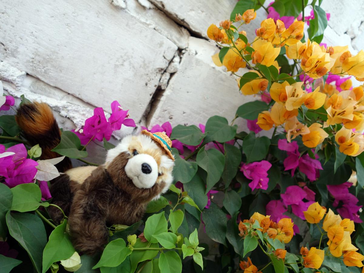 Senegal v pandím podání