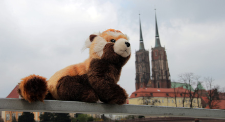 Pandajede - Wroclaw