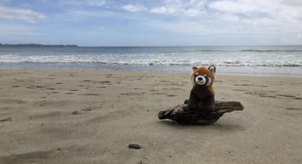 PandaJede Nový Zéland